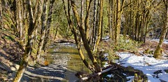 3Mile Creek downstream (from bridge) (Bill 3 Million views) Tags: tags siddoo kapoor kapoorlogging 3miles kapoormain logging indo canadian jewelsoftheqila note9 galaxy gps viewranger shawnigan renfrew main creek 3mile