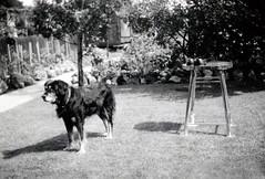 Barney (Brett Jordan) Tags: brett brettjordan oldphotos oldphotographs vintagepictures