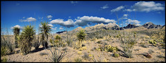 High Desert Landscape (BongoInc) Tags: chihuahuandesert organmountains newmexico winterlandscape yucca cactus ocotillo desertlandscape