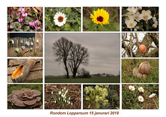 Voojaar 2019 (TeunisHaveman) Tags: collage bloem flower mushroom paddestoel voorjaar spring