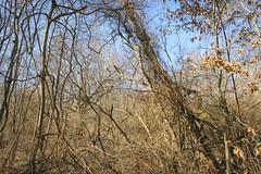 The Leaner (Modkuse) Tags: provia fujiprovia fujifilmxt2provia fujifilmxt2proviasimulation nature natural trees intimatelandscape landscape winterlandscape winter sunny sunnyday sunnywinterday art artphotography photoart fineartphotography fineart fujifilm fujifilmxt2 xt2 xf1855mmf284rlmois fujinon fujinonxf1855mmf284rlmois