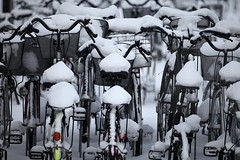Basketfuls of snow (Elios.k) Tags: horizontal outdoors nopeople bicycle manybicycles bicycleparking snow coveredinsnow basket fullofsnow city snowing heavysnowfall snowfall snowfalling background winter cold frozen freezing weather dof depthoffield focusonforeground backgroundblur bokeh white transportation meansoftransport colour color travel travelling december 2017 vacation canon photography aomori aomorishi tohoku honsu asia japan 5dmkii streetphotography aomoriprefecture tohokuregion