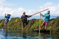 Farmers collecting seaweed as fertilizer on Lake Inle (Laszlo Horvath.) Tags: nikond7100 nikon50mmf18g inlelake burma myanmar boat