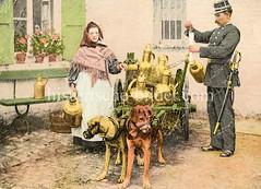 X990012 arbeitshund belgien (stadt + land) Tags: hunde hund bilder fotos arbeitshund historisch früher aufgabe transport alte fotografien