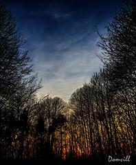 Coucher de soleil sur le mont Kemmel (DOMVILL) Tags: belgique kemmel arbre coucherdesoleil domvill mont soir soleil wwwflickrcompeoplevildom