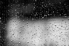 Raindrops in black and white (lilredlizzie) Tags: blackandwhite canon canon80d nature rain raindrops bokeh dof drops weather massachusetts newengland