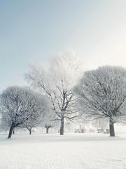 Beauty of frost ❄ (Rojs Rozentāls) Tags: riga rīga krastmala ziema ziemalatvijā winterinlatvia winter latvia latvija lettonie lettland frost frozen snow schnee trees