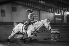 (wysharp) Tags: bw barrels barrelracing horse cowgirl