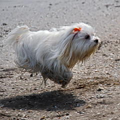 Schroendiger's dog (Robyn Hooz) Tags: dog cani dogs funny volo flight fly jump run sand sabbia pelo muso sweet speed
