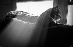 Making the most of available light. (Christy Turner Photography) Tags: christyturnerphotography cats tabby
