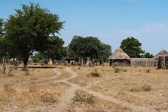 Botswana Community Village (h0n3yb33z) Tags: botswana animals wildlife bush village community africa