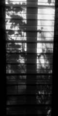 ##behind the curtain (ThorstenWiggers62) Tags: shadows curtain sun window plants sunshine