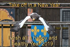 Happy New Year 2019 (Noodles Photo) Tags: happynewyear aves vögel accipitriformes greifvögel accipitridae haliaeetus seeadler haliaeetuspelagicus stellersseaeagle riesenseeadler zooamneville frankreich france canoneos7dmarkii tamronsp150600mmf563divcusdg2