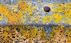 Spray Transition (jaxxon) Tags: 2018 d610 nikond610 jaxxon jacksoncarson nikon nikkor lens nikon105mmf28gvrmicro nikkor105mmf28gvrmicro 105mmf28gvrmicro 105mmf28 105mm macro micro prime fixed pro abstract abstraction urban parkinglot parking barrier paint peelingpaint cold surface texture dirty tar spatter splatter grunge grungy rebar weathered decay painted yellow caution safety