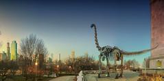 Jurassic Chicago (brightledge photography) Tags: chicago jurassic dinosaur cityscape sky museum herbivore skyline nikond850 1635mmnikkor f1810sec24mm iso100 panorama gothamcity brachiosaurus