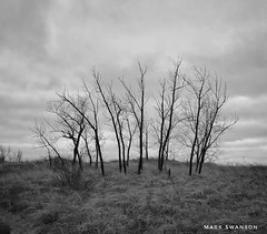 Trees (mswan777) Tags: sky cloud white black ansel monochrome mobile iphone iphoneography apple michigan bridgman scenic nature outdoor coast shore ridge silhouette tree sand grass dune landscape