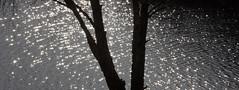 Sun dancing on the water (ArtGordon1) Tags: davegordon davidgordon daveartgordon davidagordon daveagordon artgordon1 winter hollowpond hollowponds leytonstone london england uk january 2019 silhouette silhouettes