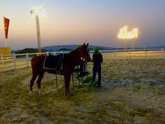 Doha 2018 © Neale Castelino Photography #nealecastelino #letscreateart #nealecastelino #nealecastelinophotography (nealecastelino) Tags: nealecastelino letscreateart nealecastelinophotography