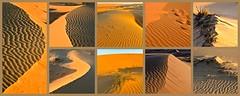 Oman 2018 - Désert de Wahiba (philippebeenne) Tags: oman wahiba désert dunes sables sands moyenorient middleeast paysages landscape sandscape