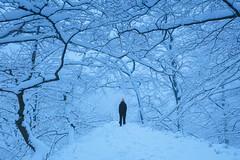 Vinter Söderåsen I (Gustaf_E) Tags: forest johannaeriksson kväll landscape landskap nationalpark skog skåne snow snö sverige sweden söderåsennationalpark vinter winter woods