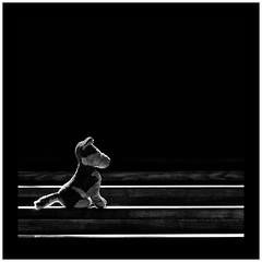 silent worship (WolfiWolf-presents-WolfiWolf) Tags: wolfiwolf wolfi wolf wolfismus eneamaemü silentworship huldigung licht light lupus lupuslupus lichtschatten liebe alone allein quadrat butlers butler drei i ibindaslicht ichträumegernvonkleinenwolfis ich conductor creator chef dirigent derprächtigste derschönste dirigierendster explorant farky fuddlers fresko farkas feiertag fest glück he himmel huldigtmeinewerke jazzinbaggies kleinewolfis leben multiversen marieschen multiverses meinemajestät meditation noblesse ohrwascherl portrait quantenuniversum quantensuppe rasse stüben schöpfung schön schweinebauch treue universum universe vollmond versenkung vampirismus weristderschönste xxx joy zeigen