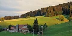 DSC05357 (ursrüegsegger) Tags: linden juli august getreideernte bauernhöfe landschaft regenbogen