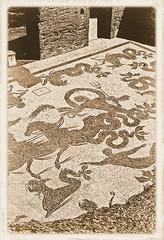 Ostia Baths BW-SMALL (AVT·PAX·AVT·BELLVM) Tags: rome monochrome nikon f4s ilford black white film 35mm albumen ostia antica street building ruin tiber river baths trastevere island temple augustus botanical garden ponte sisto matcus aurelius colunm forum roman courtyard angel alter fatherland