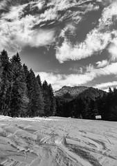 view to the top (genelabo) Tags: schönberg fleck lenggries bayern bavaria ski snowboard snow schnee skitour sun alps berge 1621 m voralpen isartal genelabo sky himmel snowfield view black white schwarz weiss bw sw deutschland germany wolken clouds