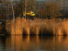 Libellenflügel (flohserver) Tags: berlin müggelspree ufer krankenhaus altköpenick