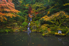 Autumn in the Japanese Garden (RobertCross1 (off and on)) Tags: a7rii alpha emount fe1635mmf4zaoss ilce7rm2 japan japanesegarden longexposure multnomah or oregon pdx pacificnorthwest portland portlandjapanesegarden sony washington washingtonpark autumn cascade fall foliage fullframe garden landscape leaves mirrorless reflection trees water waterfall