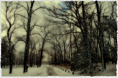 Winter Moods (LotusMoon Photography) Tags: photomanipulation winter snow woods trees road path photoshop painterly twighlight snowy cloudy moody moods dark forest annasheradon artistic art manipulated postprocessed photoart digitalart digital lotusmoonphotography somber melancholy memory memories depression seasons seasonal sad sadness feelings mystical mysterious mystery poetic poem dreamscape dreamlike atmosphere mood