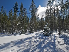 mp1130828WednesdaysTrail (thom52) Tags: thom bend central oregon xc skiing snow sno park meissner