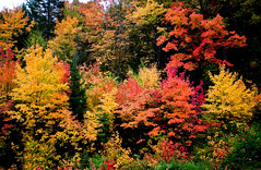 Kaleidoscope of Colors, Algonquin Provincial Park, Ontario, Canada (klauslang99) Tags: klauslang nature naturalworld northamerica canada colour color algonquin park ontario trees fall autumn