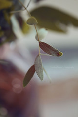"""You belong where you're loved."" (Sandra Köppen 