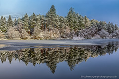 Pine Tree Reflections catching the Sun at Glencoe Lochan-2688 (Splendid What) Tags: 2019 frozen glencoelochan green ice january lake mountians scotland snow trees p{inetrees water bluesky