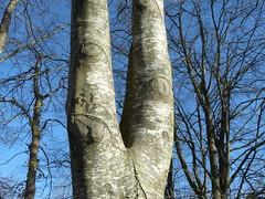Les jambes de l'arbre (ggogwened56) Tags: arbre jambes corps marche bretagne ciel forêt bois insolite