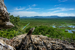 Palo Verde (bransch.photography) Tags: view outdoor wilderness exotic vacation nature nationalpark birds eye lizard reptile sky scenic animal panorama paloverde adventure colorful wildlife beautiful mountain costarica bird iguana outdoors hiking america fauna tropical centralamerica