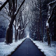 bicycle path (Jos Mecklenfeld) Tags: winter snow schnee sneeuw forest wald bos nature natur natuur nulbos westerwolde sonya6000 sonyilce6000 selp1650 sonyepz1650mm niederlande nederland terapel groningen netherlands nl bicyclepath radweg fietspad