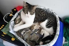 Haley (Escursso) Tags: cat cats gatos gat kitten kitty animal mascota pet