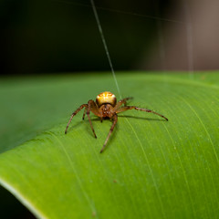 Spider-1 (Roz B) Tags: approved frog green
