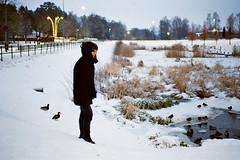 duck visits (nicolee.camacho) Tags: snow sweden swedish winter vinter white outdoors nature europe portugal spain nicolee c film pentax p30 pentaxp30 sharefilm analog rollo película pelicula bro stockholm blue nieve invierno