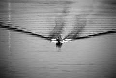 ritorno (return) (pjarc) Tags: europe europa italy italia ancona marche ritorno return barca boat mare sea mediterraneo mediterranean scia onde tides foto photo bw black white bianconero nikon dx 2019 pescatori fishermans