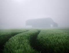 Descending mist (Anthony White) Tags: sixpennyhandley england unitedkingdom gb fog mist dorset barn cereal sony nopeople wet outside nature