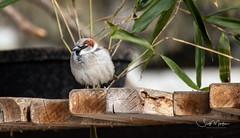 IMG_0502 (Scott Martin - Photographer) Tags: calgaryzoo calgary alberta canada animals birds bird