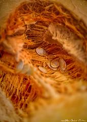 "Pumpkin (Alex ""Sasha"" Chitnev) Tags: pumpkin autumn red universe seed abstract finearts fine arts nikon d610"