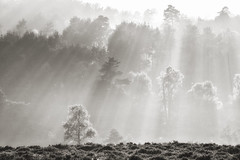 """""""As The Mist Clears"""" (tsbl2000) Tags: ashdownforest nikond810 tamron150600mmf563 oldlodge sussexwildlifetrust naturethroughthelens"""
