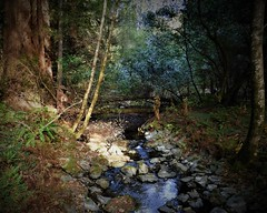 Streaming Light (sirenscotland) Tags: landscapes outdoors creek stream woods forest bridge water fern foliage california