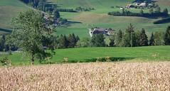 DSC05653 (ursrüegsegger) Tags: linden juli august getreideernte bauernhöfe landschaft regenbogen