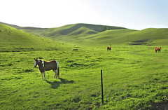 Out Standing in Their Field (skipmoore) Tags: livermore rural horse grass hills green