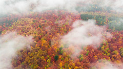 Autumn colours from above